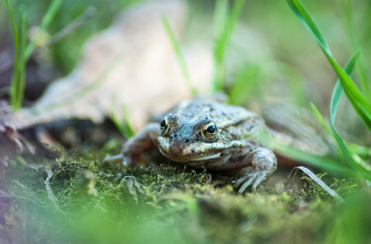 How to get rid of frogs in my backyard? - BackYard54.com