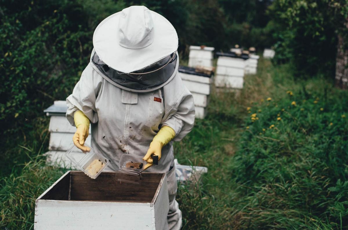 Can I have a beehive in my backyard? - BackYard54.com