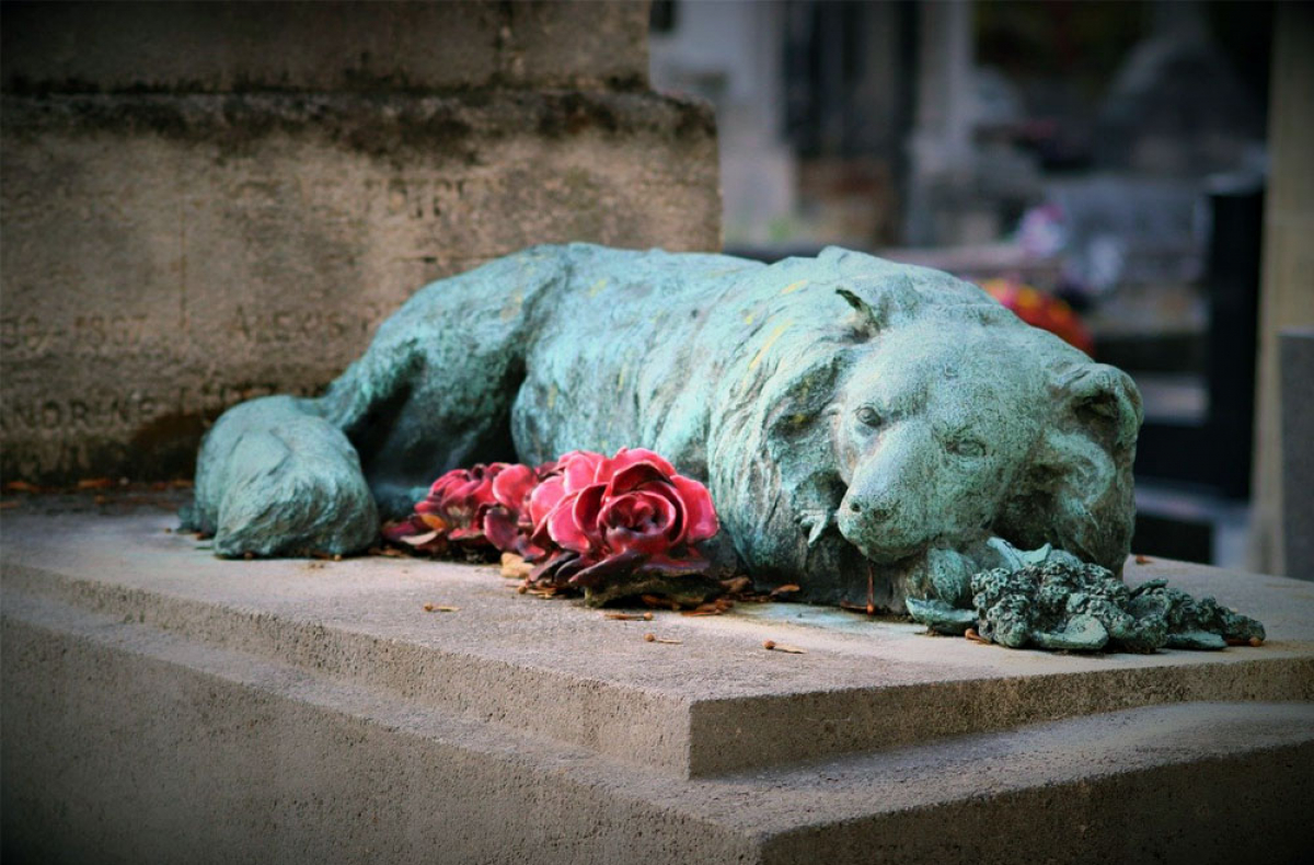 Can you bury a dog in your backyard? - BackYard54.com