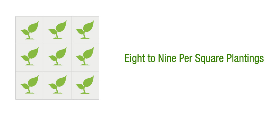 Eight to Nine Per Square Plantings