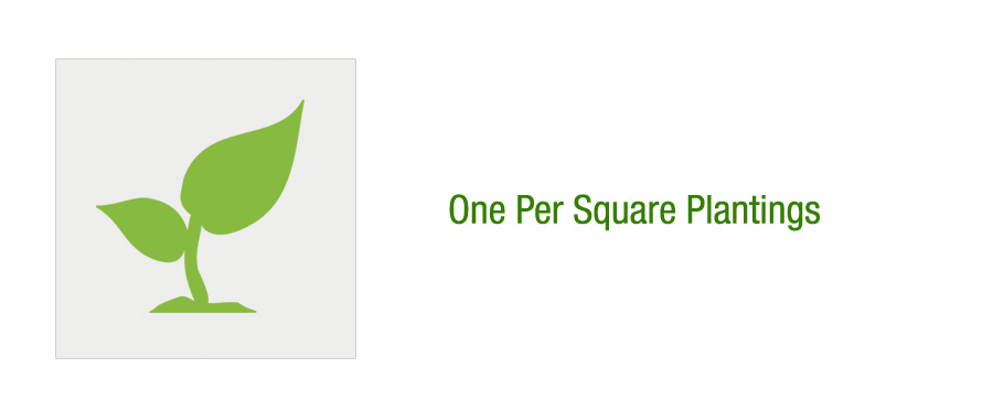 One Per Square Plantings