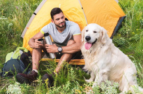 13 Best Tips for tent camping with your dog