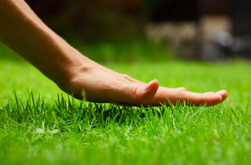 How to cut grass without a lawn mower?