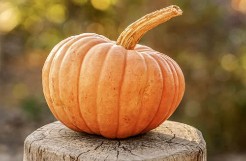 How to grow a pumpkin?