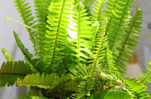 Best air purifying plants for your home