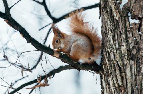 How to attract squirrels to your backyard?