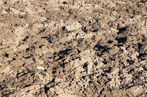Compost versus topsoil