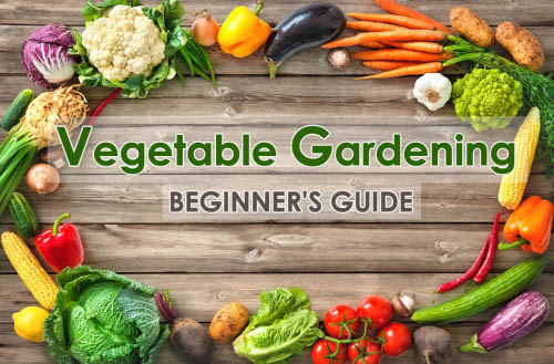 Vegetable Gardening - Beginner's Guide