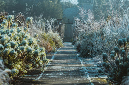How to prepare a garden for winter?